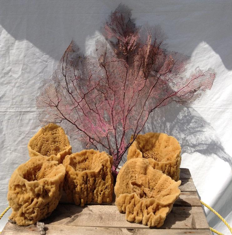 Sea fan and sponges
